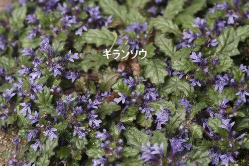_MG_5226.jpg