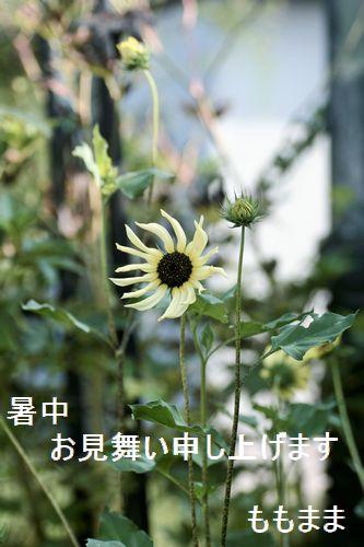 _MG_6402.jpg