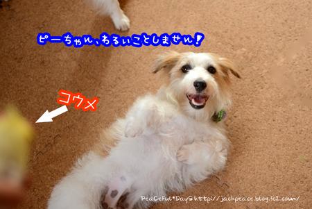 160531_okame1.jpg