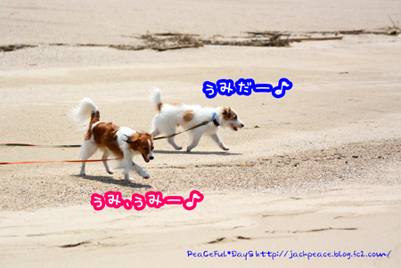 160626_kataonami.jpg
