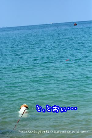 160626_kataonami5.jpg