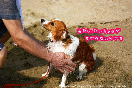 160714_umi4.jpg