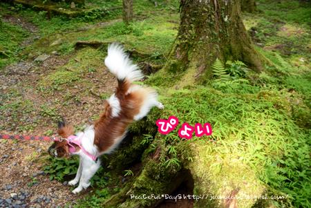 160803_koya3.jpg