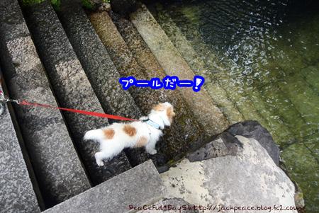 160803_koya5.jpg