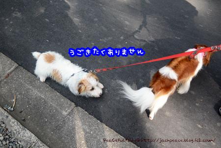 160803_koya9.jpg