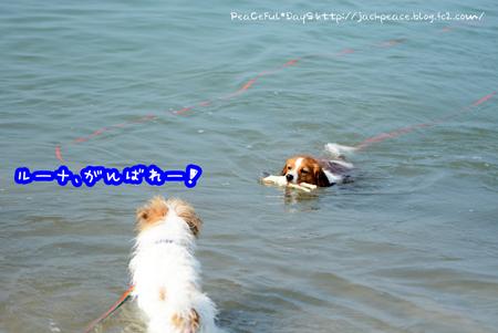 160803_umi7.jpg