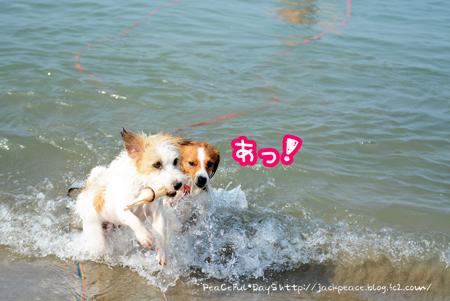 160803_umi8.jpg