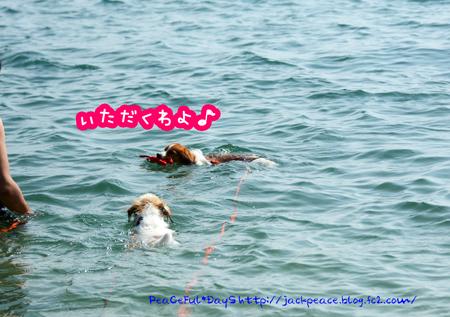 160809_umi3.jpg