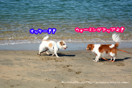 160826_umi6.jpg