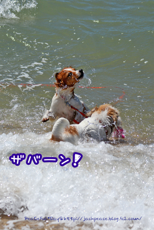160831_umi6.jpg