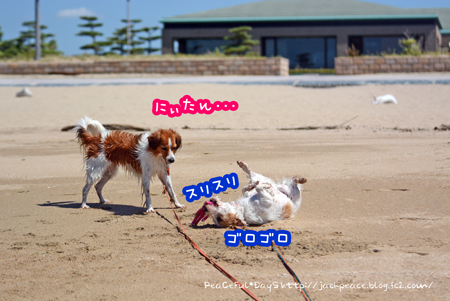 160831_umi8.jpg