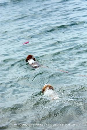 160906_swim2.jpg