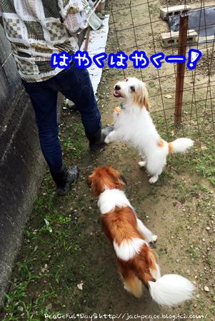 160924_hatake5.jpg