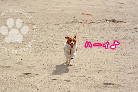 161007_umi8.jpg