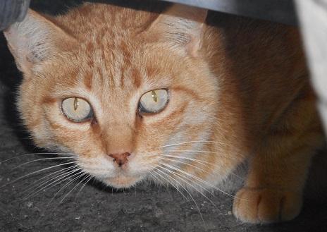 野良猫①20160716