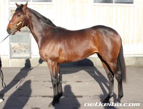【新馬】ルーラーシップの最高傑作レジェンドセラーが戸崎騎乗で6月12日デビュー決定!【新種牡馬】