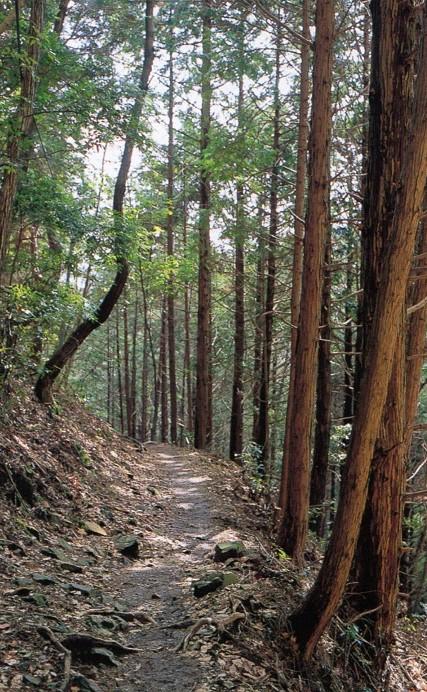 月輪寺への急傾斜の山道