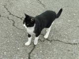 JR磯部駅でまとわりついてきた猫