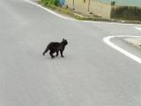 JR姥堂駅 猫が逃げる!