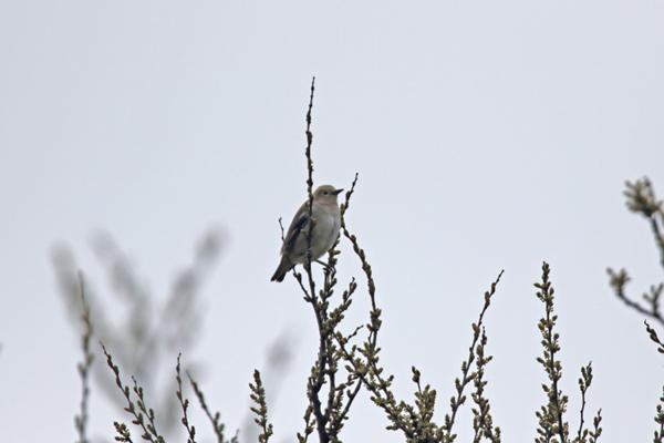 kimsbird10423.jpg