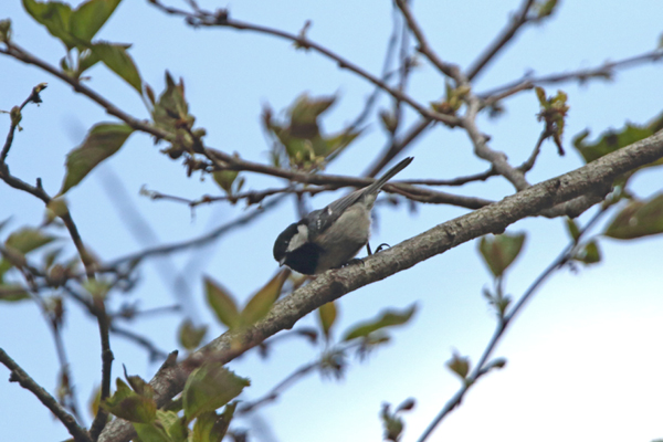 kimsbird10512.jpg