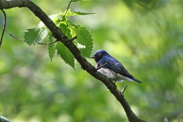 kimsbird10590.jpg
