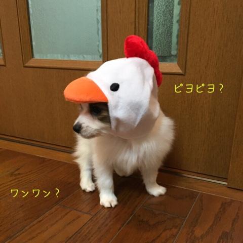 2016102100344992a.jpg
