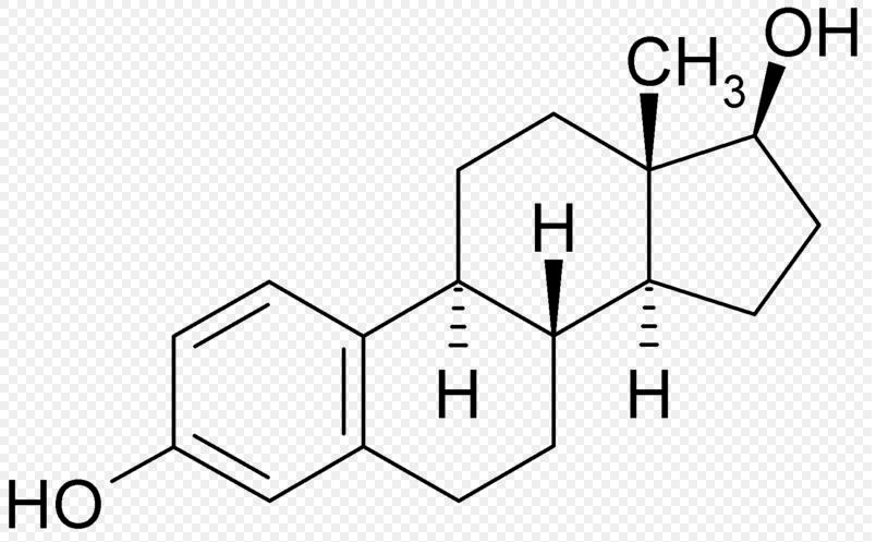 estrogen.png