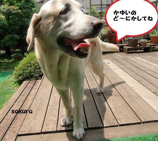 CIMG5795.jpg