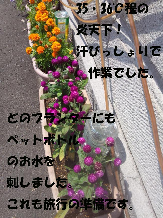 019-8754-8765-36899.jpg