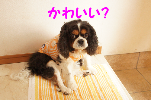 20160609174348f80.png