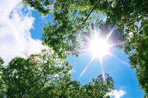 tree_woods_00023.jpg