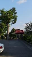 20160514旧東海道原生の森027