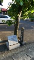 20160514旧東海道原生の森026