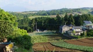 20160514旧東海道原生の森049