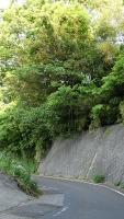 20160514旧東海道原生の森062