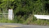 20160514旧東海道原生の森076