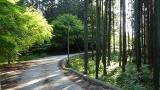 20160514旧東海道原生の森090