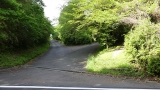 20160514旧東海道原生の森095