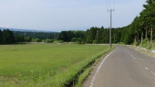 20160514旧東海道原生の森105