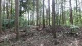 20160514旧東海道原生の森126