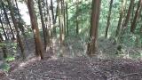 20160514旧東海道原生の森130