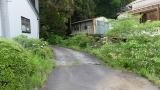 20160514旧東海道原生の森132