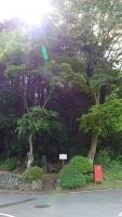 20160514旧東海道原生の森136