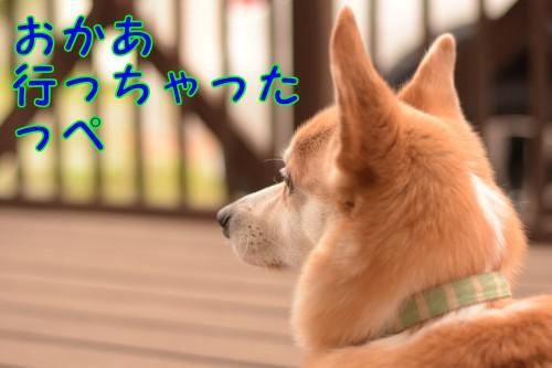 20160609_1.jpg