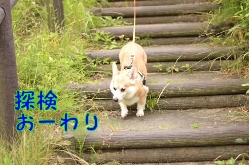 20160621_9.jpg