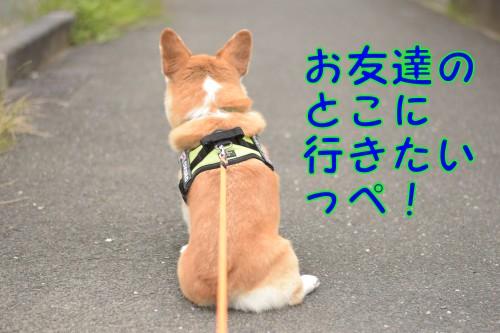 20160629_4.jpg