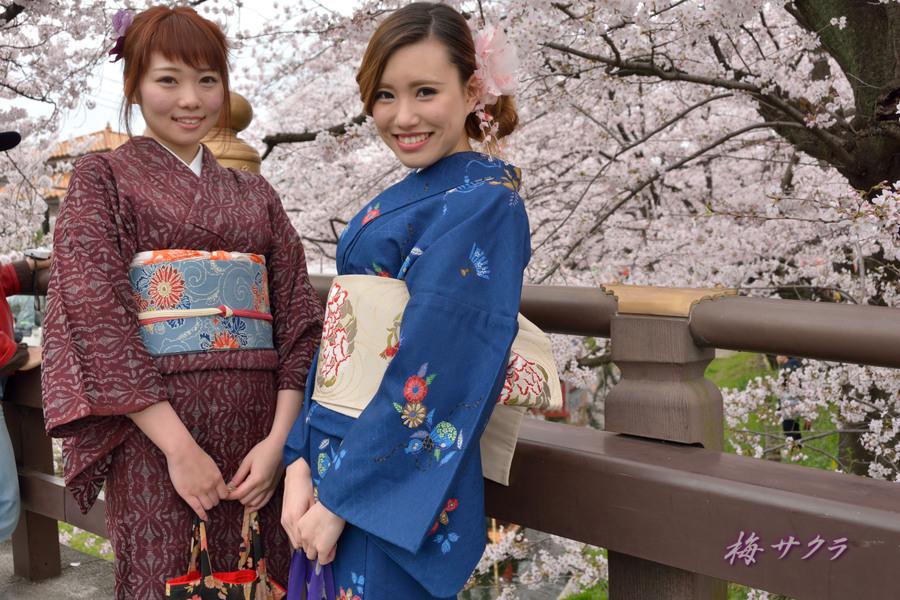 小江戸川越桜祭り1(誉桜2)変更済