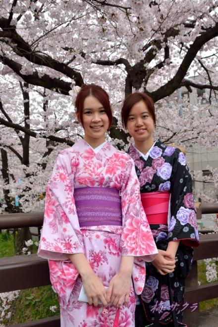 小江戸川越桜祭り1(誉桜10-1)変更済