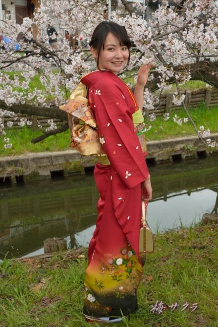 小江戸川越桜祭り2(3-1)変更済